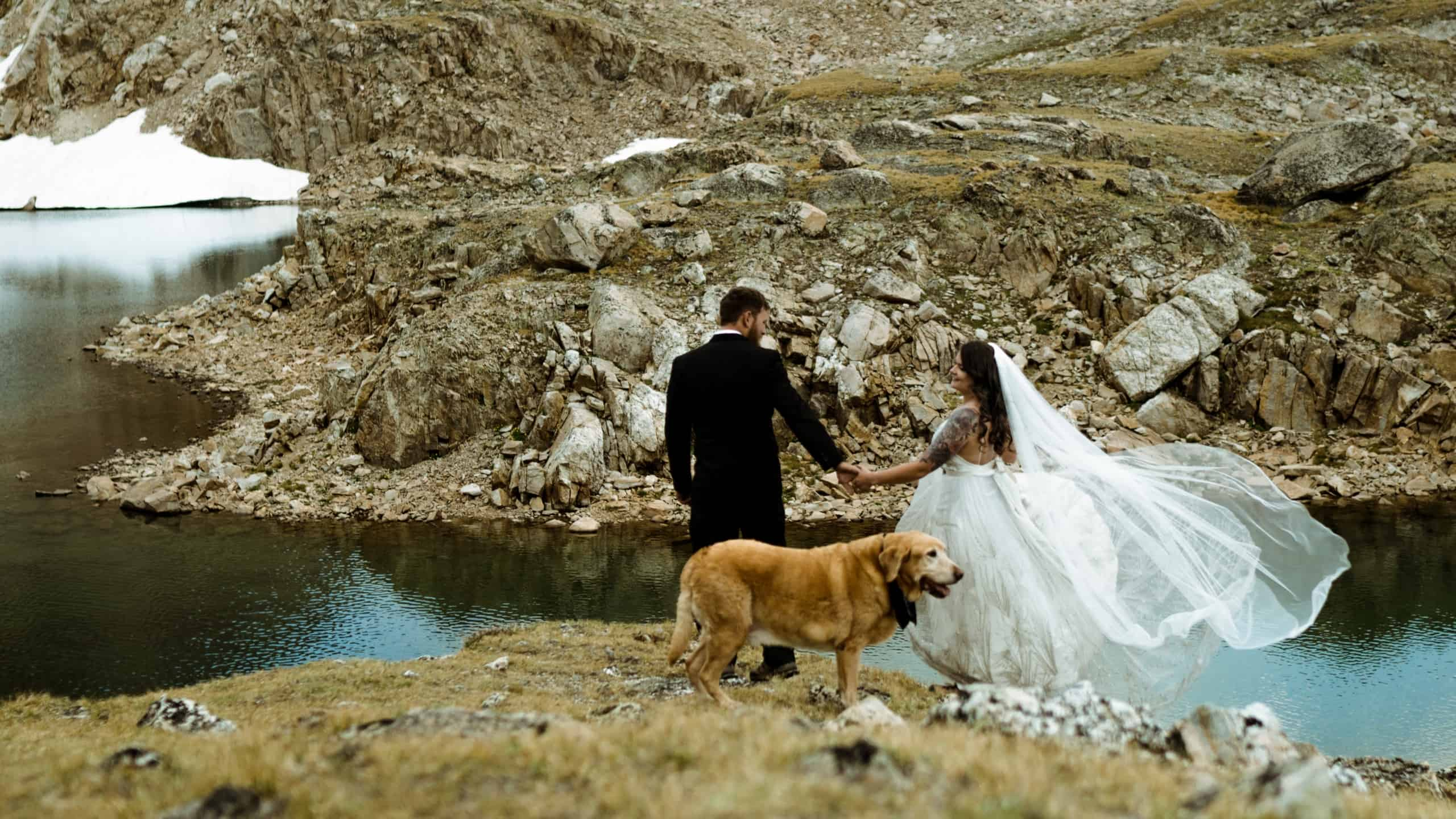 Dog friendly wedding venue